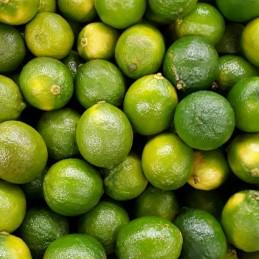 Lime LV